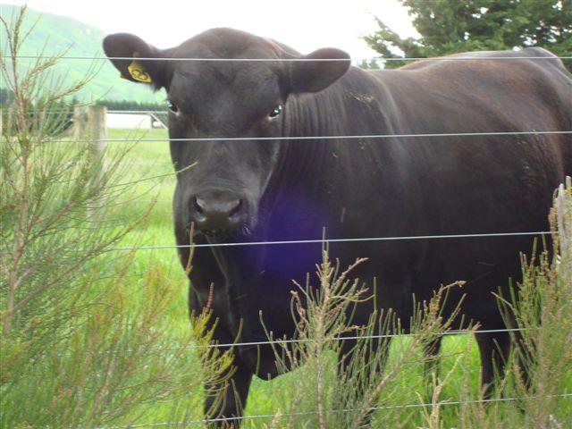 bulls-006
